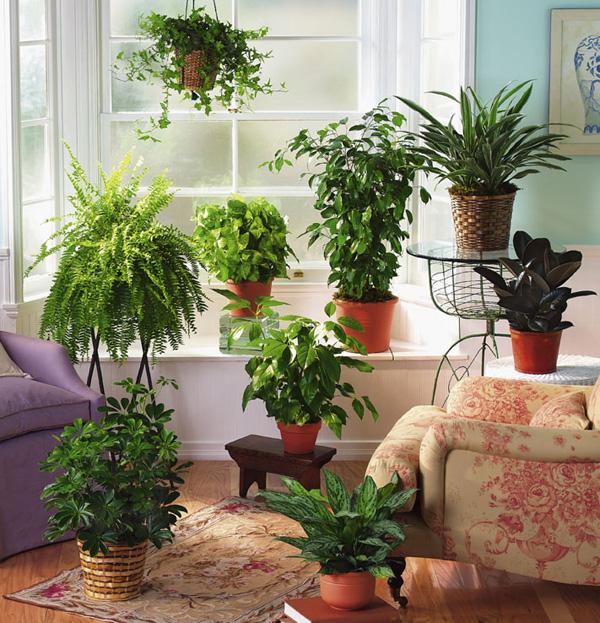 Какие цветы можно дома выращивать комнатные